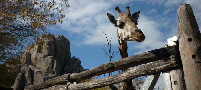 Állatkert Budapest szívében ZOO Budapešť